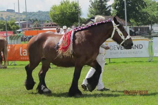 1 wycena konie belg 540