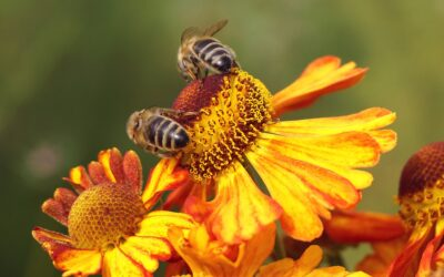 """Wyjazd studyjny w ramach operacji """"Innowacyjne pszczelarstwo"""""""