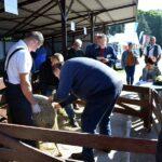 Regionalna Wystawa Zwierząt Hodowlanych w Szepietowie