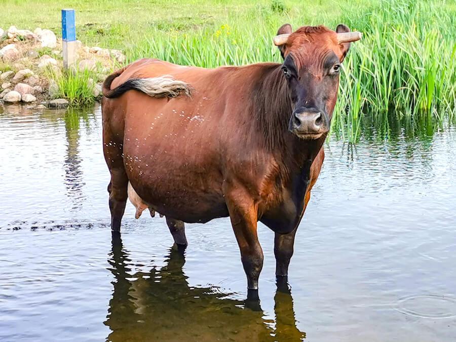 """Rolnicy realizujący działanie """"Dobrostan zwierząt"""""""