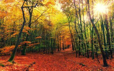 Wsparcie na inwestycje zwiększające odporność ekosystemów leśnych i ich wartość dla środowiska – kolejny nabór!!!